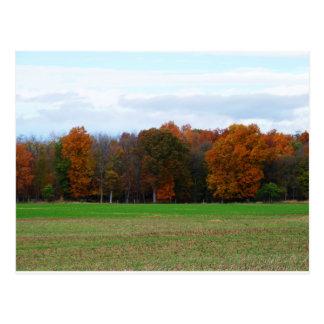 Cartão Postal Cores do outono