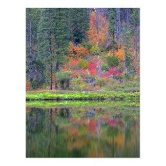 Cartão Postal Cores do outono das florestas na cascata 2