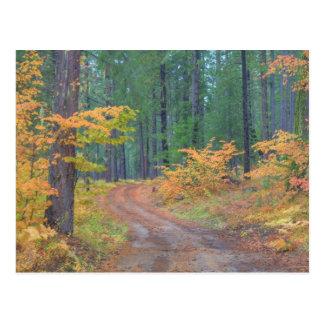 Cartão Postal Cores do outono das florestas na cascata 7