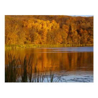 Cartão Postal Cores do outono no parque estadual do Maplewood