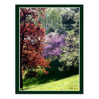 Cartão Postal Cores do primavera