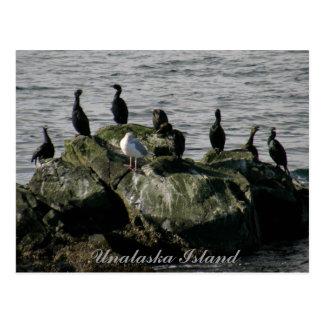 Cartão Postal Cormorants & uma gaivota, ilha de Unalaska