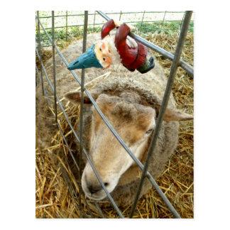 Cartão Postal Cornelius e os carneiros