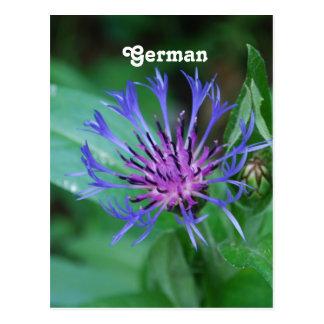 Cartão Postal Cornflower
