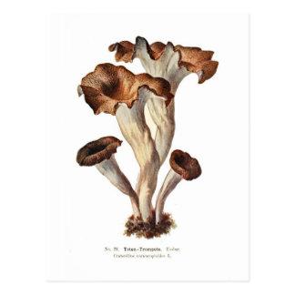 Cartão Postal Cornucopioides do Craterellus
