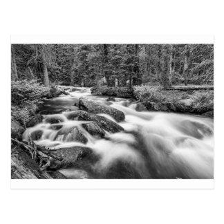 Cartão Postal Córrego da floresta nacional de Roosevelt preto e