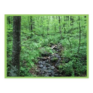 Cartão Postal Córrego que funciona através do vale de Forrest