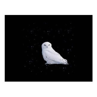 Cartão Postal coruja branca no espaço