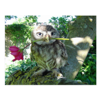 Cartão Postal Coruja com rosa