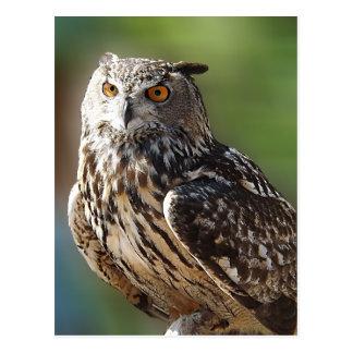 Cartão Postal Coruja de Eagle impressionante com olhos