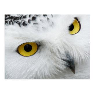 Cartão Postal coruja nevado Amarelo-eyed