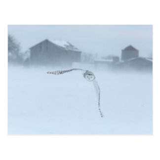 Cartão Postal Coruja nevado em vôo no inverno
