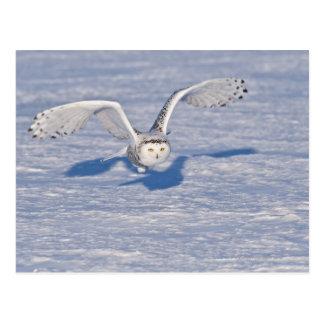 Cartão Postal Coruja nevado no vôo