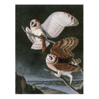 Cartão Postal Corujas de celeiro, os pássaros de América John
