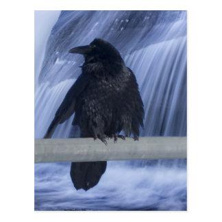 Cartão Postal Corvo empoleirado sobre uma cachoeira