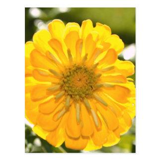 Cartão Postal Cosmo amarelo
