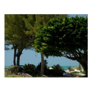 Cartão Postal Costa do golfo de Florida