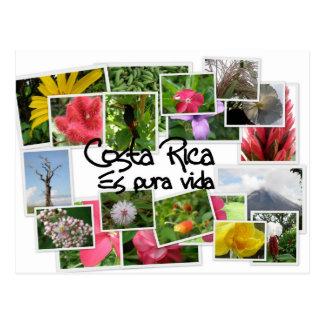 Cartão Postal Costa Rica es Pura Vida!