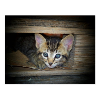 Cartão Postal Couro cru do gatinho - e - busca