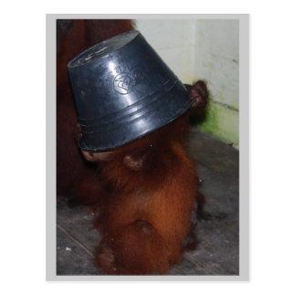 Cartão Postal Couro cru do orangotango - e - busca