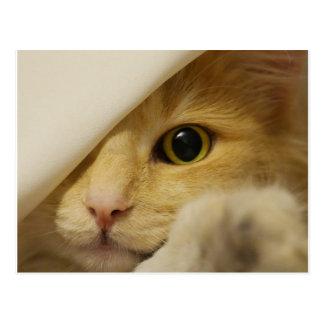 Cartão Postal Couro cru - e - gatinho da busca sob a cobertura