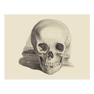 Cartão Postal Crânio e livro