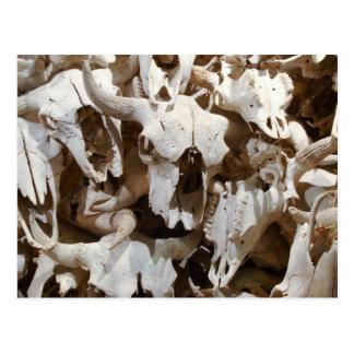 Cartão Postal Crânios do bisonte