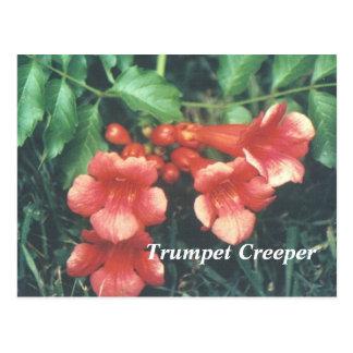 Cartão Postal Creeper de trombeta
