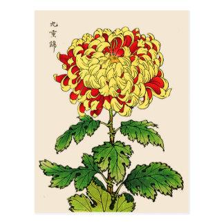 Cartão Postal Crisântemo do japonês do vintage. Amarelo da