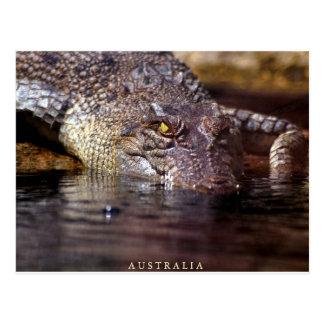 Cartão Postal crocodilo, A U S T R A L MIM A