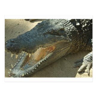 Cartão Postal Crocodilo com tooth.jpg quebrado