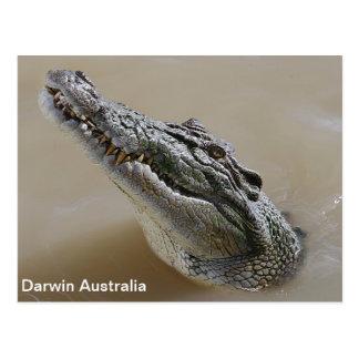 Cartão Postal Crocodilo Darwin Austrália da água salgada