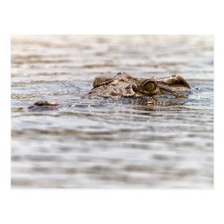 Cartão Postal Crocodilo de Nile