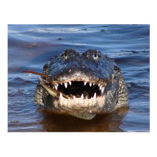 Cartão Postal Crocodilo de sorriso