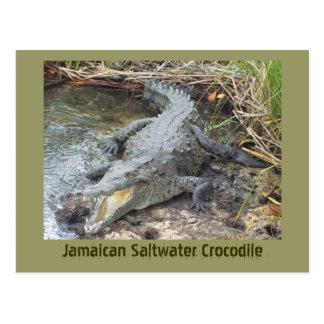Cartão Postal Crocodilo jamaicano da água salgada