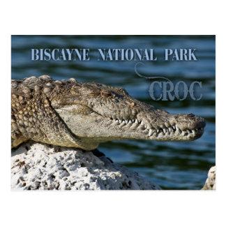 Cartão Postal Crocodilo, parque nacional de Biscayne, Florida