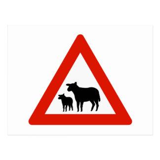 Cartão Postal Cruzamento dos carneiros, sinal de tráfego,