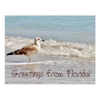 Cartão Postal Cumprimentos da gaivota de Florida Miami
