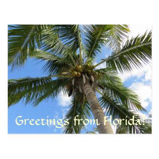 Cartão Postal Cumprimentos da palmeira de FLorida/coco