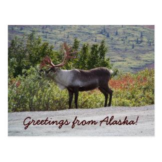 Cartão Postal Cumprimentos de Alaska!