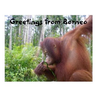 Cartão Postal Cumprimentos de Bornéu