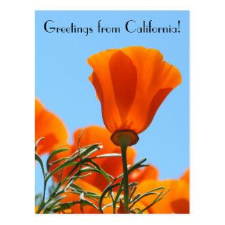 Cartão Postal Cumprimentos de Califórnia!