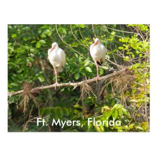 Cartão Postal Cumprimentos de Florida!