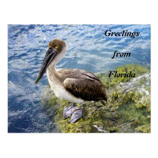 Cartão Postal Cumprimentos de Florida