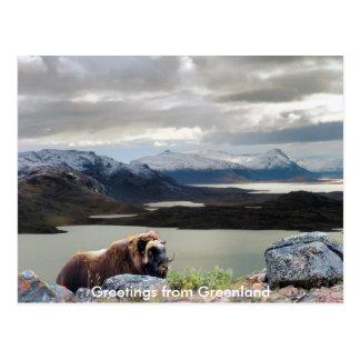 Cartão Postal Cumprimentos de Greenland 13