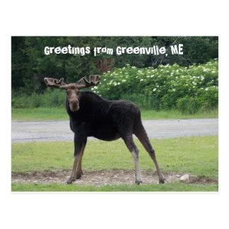 Cartão Postal Cumprimentos de Greenville 1