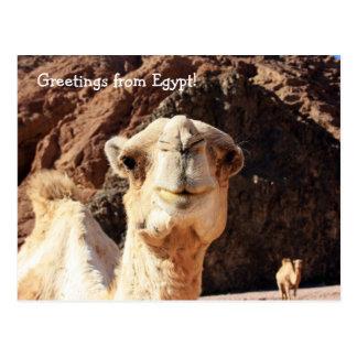 Cartão Postal Cumprimentos de um camelo egípcio