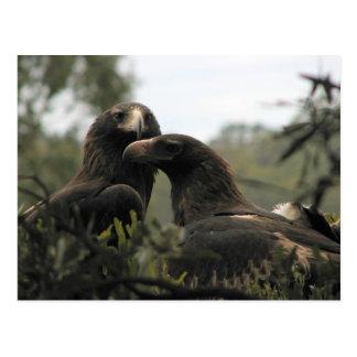 Cartão Postal Cunha tasmaniana águias atadas