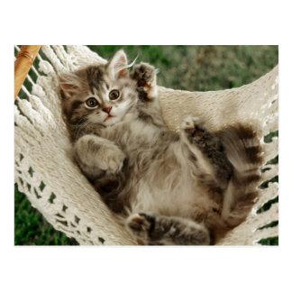 Cartão Postal Cute Kitten em Hammock