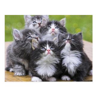 Cartão Postal Cute kittens